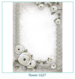 Marco de la foto de la flor 1627
