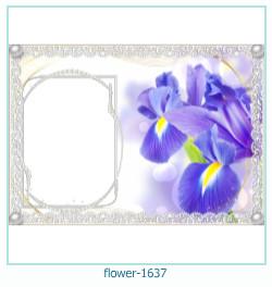 फूल फोटो फ्रेम 1637