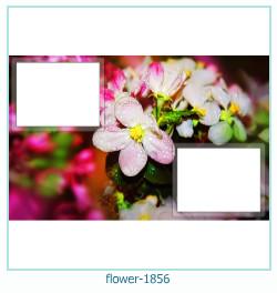 fleur Cadre photo 1856