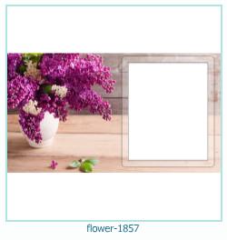 fleur Cadre photo 1857