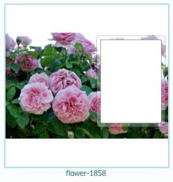 fleur Cadre photo 1858