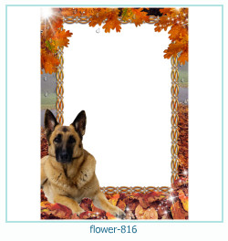 flower Photo frame 816