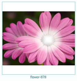 Marco de la foto de la flor 878